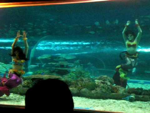 Manila Ocean Park dancing mermaids finale