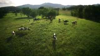 Moc Chau Milk TVC (Vietnam) Thumbnail