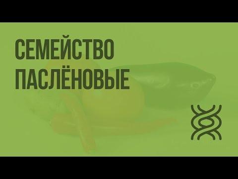 Пасленовые. Видеоурок по биологии 6 класс