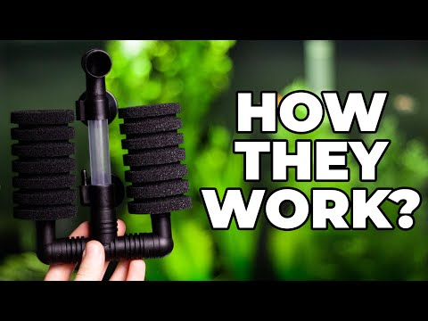 How Do Sponge Filters Work?