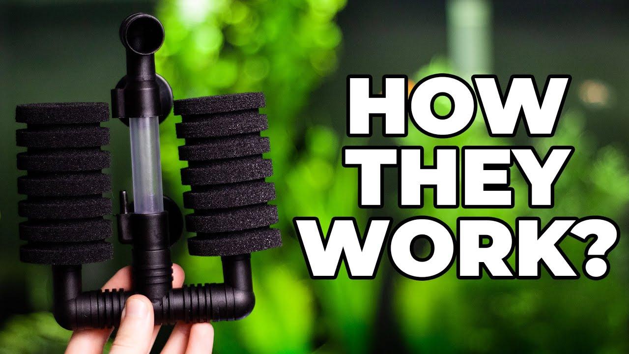 How Do Sponge Filters Work? - YouTube