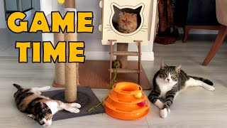 Game time for Persian cat, Calico cat, Angora cat and Tabby cat.