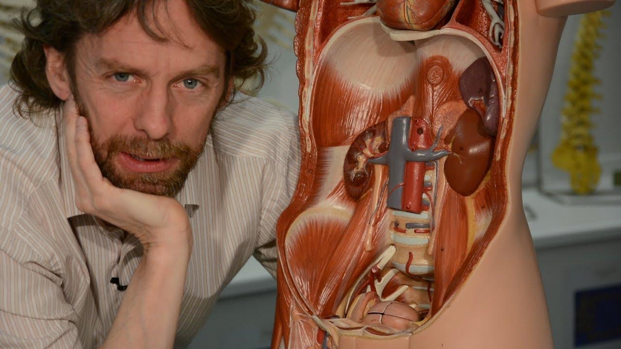 spleen (anatomy)