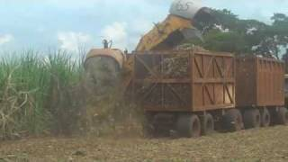 Mechanized Sugarcane Harvest in Brazil