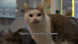 Коты за курсантов Satisfaction флешмоб