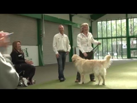 Dog Training Workshops - CIDBT -Colin Tennant MA  Dog TV