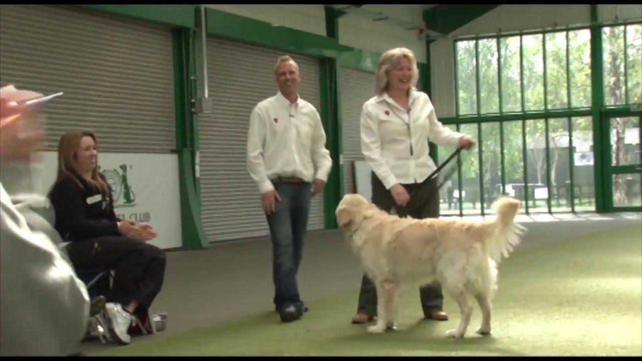 Dog Training Accreditation Uk