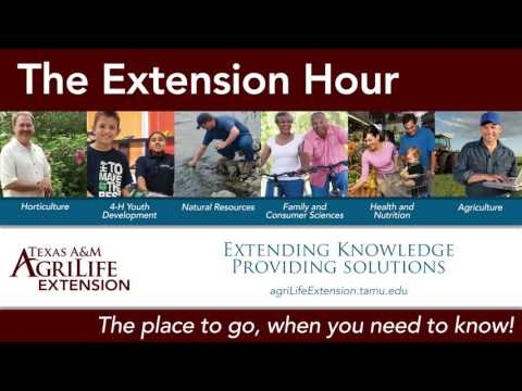 August 19th, 2016 - The Extension Hour with Texas A&M Agrilife Extension Service