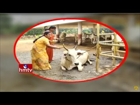 Success Story Of Farmer Balakrishna | Importance Of Dairy Farm | Vijayawada | Nela Talli | HMTV