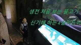 대전 아쿠아리움