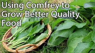 Growing and Using Comfrey - Perfect Plant for Permaculture Vegetable Gardening