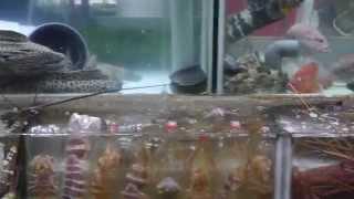 The Accidental Aquarium: Fish Tanks At A Seafood Restaurant In Sai Kung, Hong Kong.