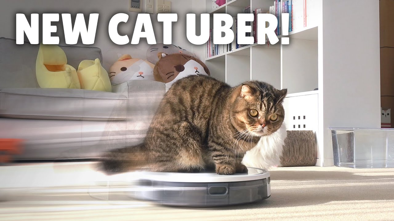 My Robot Vacuum Transformed into a Cat Uber! | Kittisaurus