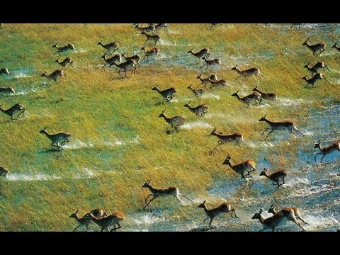 The Okavango Delta - Okavango River | Africa Predators (2018 Documentary)