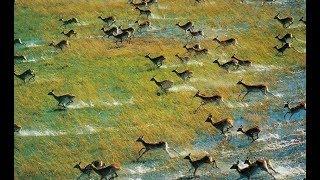The Okavango Delta - Okavango River | Africa Predators (2018 Documentary)