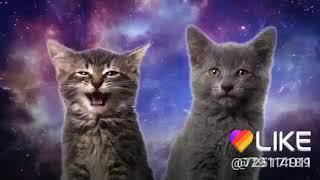 Песня милых котят! 😻😻😻