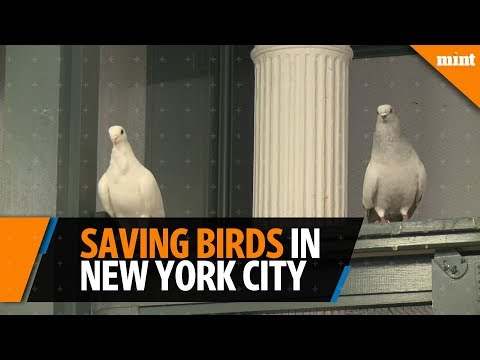 A refuge is saving birds in the middle of New York City
