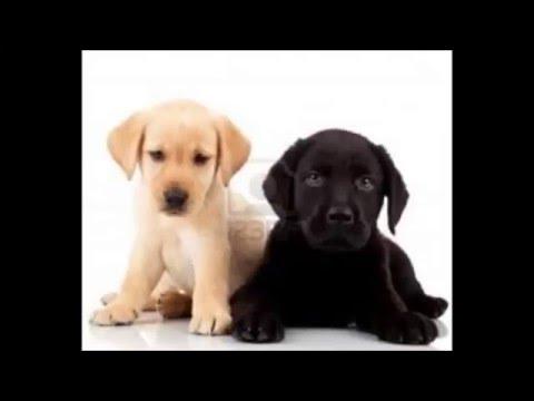 I cani piu belli del mondo secondo me e mady youtube - I mobili piu belli del mondo ...