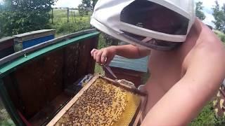 Как сделать из кормовой рамки гнездовую, печатают пчелу в срезанной рамке