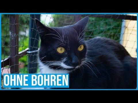 Balkon (un)professionell katzensicher machen | Ohne Bohren
