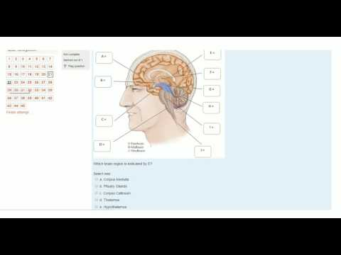 Biological Psychology Practice Test [*WATCH IN HD*]