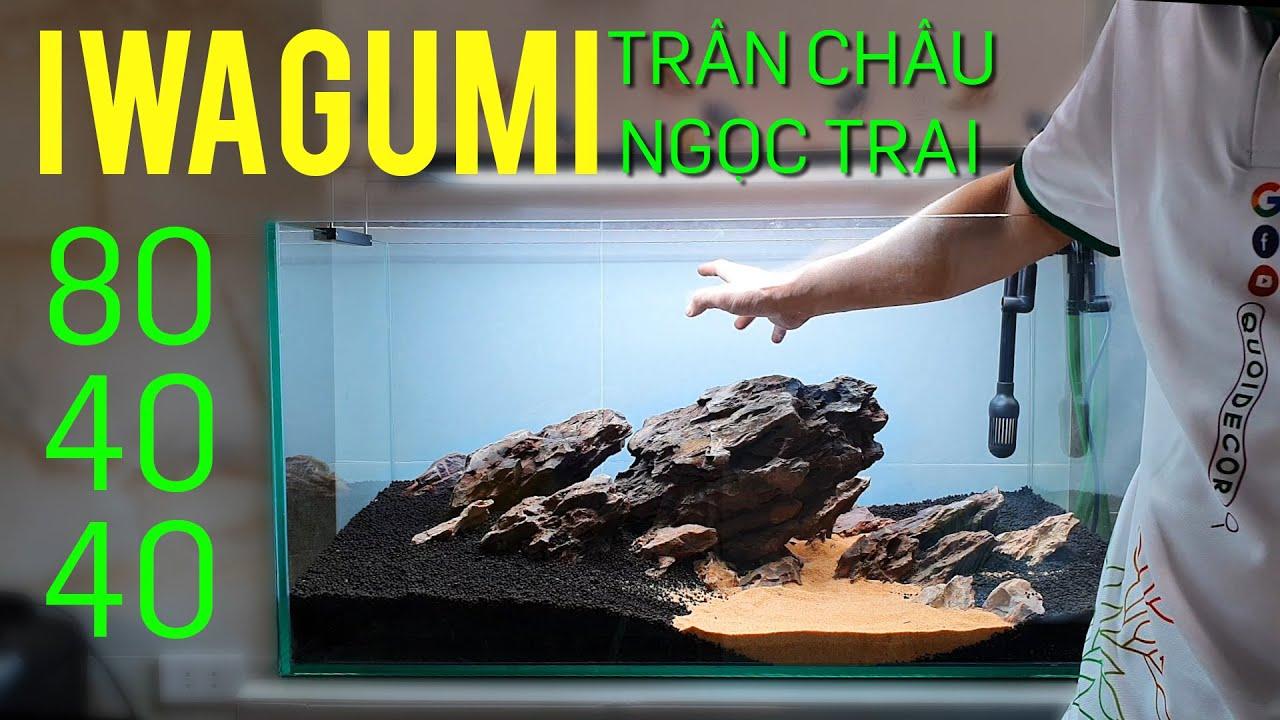 Hướng dẫn setup hồ thuỷ sinh iwagumi đá tiger và trân châu ngọc trai 844 - Quoidecor