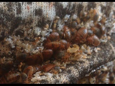 Уничтожение домашних-постельных клещей,клопов,жуков|+7-925-407-37-57