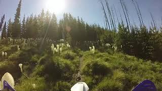Bear Grass Blooming