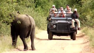 Abercrombie & Kent: Luxury Travel, Kruger Park Safari Experience, South Africa
