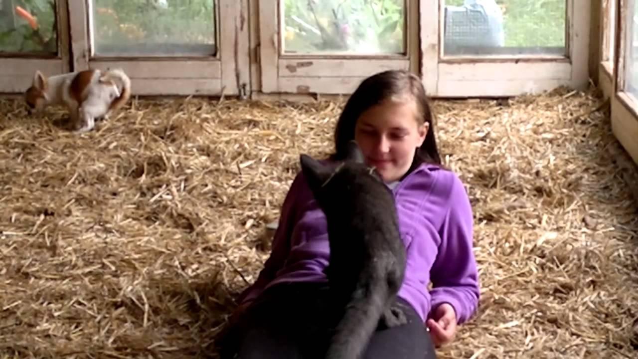 Der Fuchs Und Das Mädchen