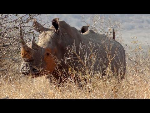 Metsi-Metsi Trail (Kruger National Park)