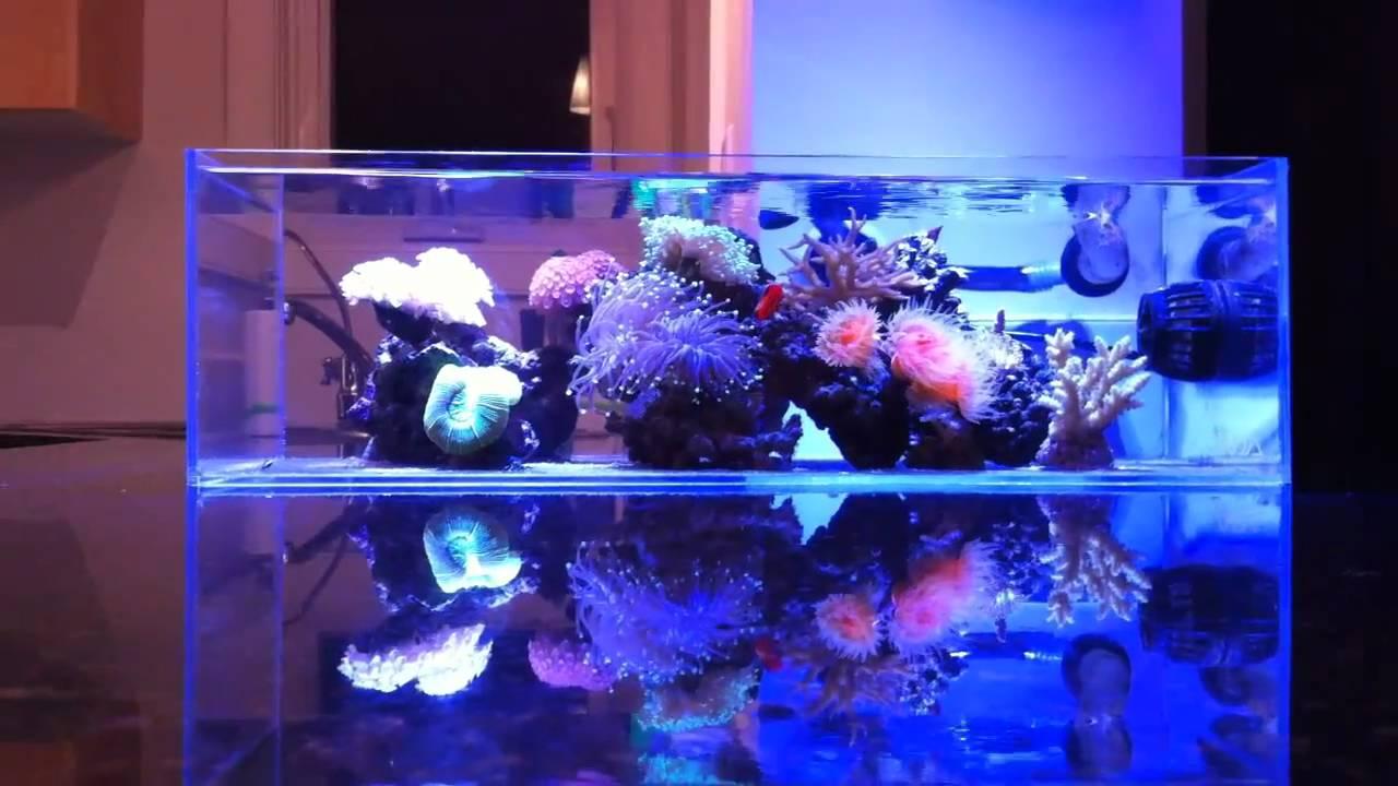 My Ada Nano Reef Youtube
