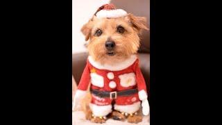 去年のクリスマス前にサンタがやってきて、なつめをちゃいにプレゼント...