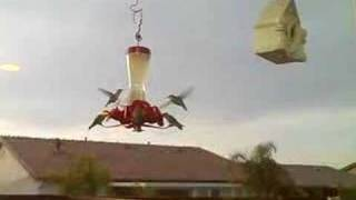 Hummingbird Feeder, Watch Them Eat. Totally Awesome.
