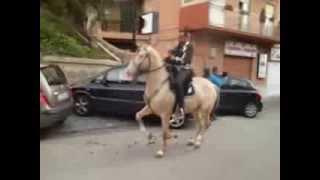 video sfilata agrigento 2013 ventisca addestramento cavalli mortillaro(video sfilata agrigento 2013 ventisca addestramento cavalli mortillaro., 2013-11-12T20:09:18.000Z)