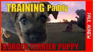 TRAINING my BORDER TERRIER PUPPY