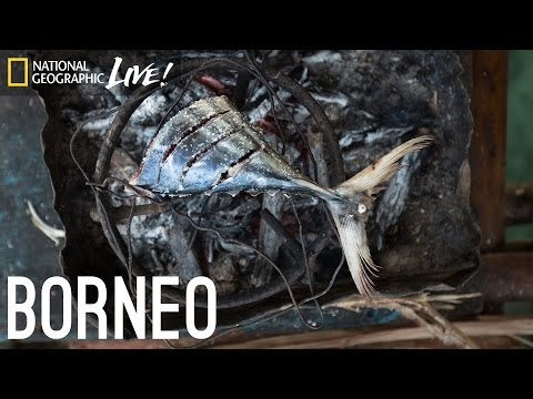 We Are What We Eat: Borneo - Nat Geo Live