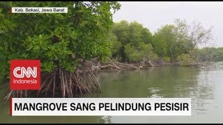 Selamatkan Hutan Mangrove demi Keberlangsungan Ekosistem Pesisir