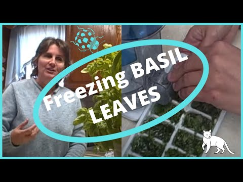 How To Freeze Preserve Basil Leaves In Ice Cube Trays