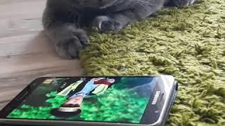 Кот смотрит Уральские Пельмени