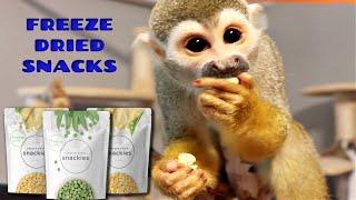 Baby Monkey oLLie Opens Freeze Dried Peas & Corn Snack