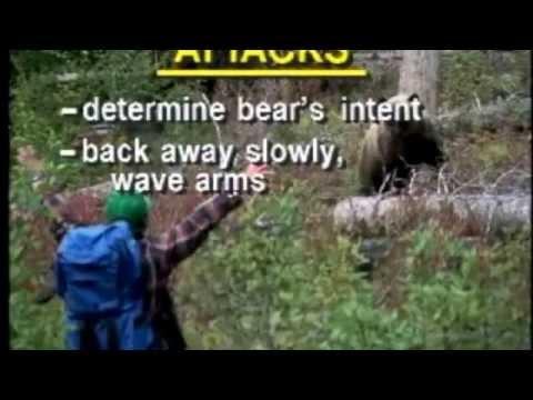 Bear Aware 1994