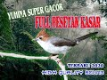 Yuhina Super Gacor Full Besetan Tajam  Mp3 - Mp4 Download