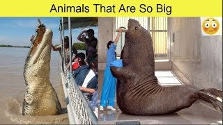 Animals That Are So Big, It's Hard to Believe They're Real