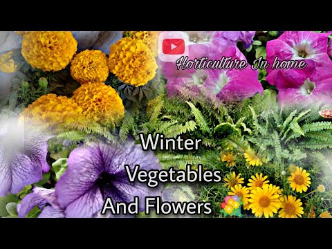 Winter Growing Vegetables And ☘️ Plants – ll horticulture In home .