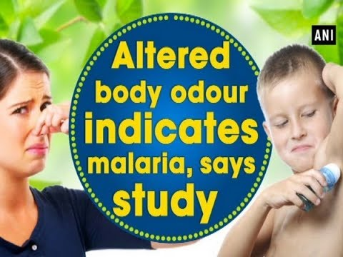 Altered body odour indicates malaria, says study  - ANI News
