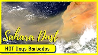 Sahara Dust Storms and Hot Days in Barbados