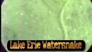 Lake Erie Underwater Video