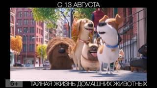 Тайная жизнь домашних животных, 6+