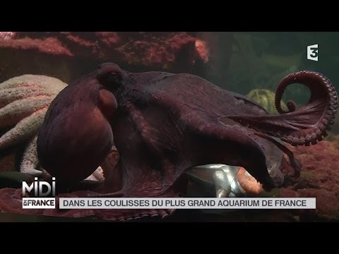 ANIMAUX : Dans les coulisses du plus grand aquarium de France